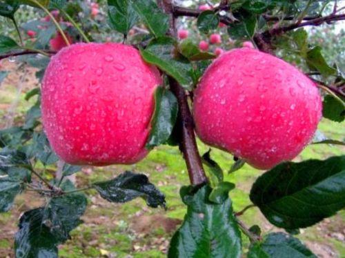 苹果一夜被偷光 女子徒手拆毁atm机 高手都在人间