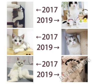 2017和2019的对比是什么梗 为什么朋友圈都在晒2017和2019的对比